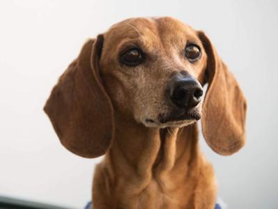 Não podemos negligenciar o Universo dos Cães em troca de likes.