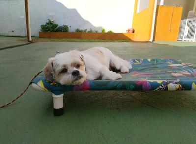 1º dia de treino intensivo do Luke, um cachorro reativo com dificuldade de ser manuseado