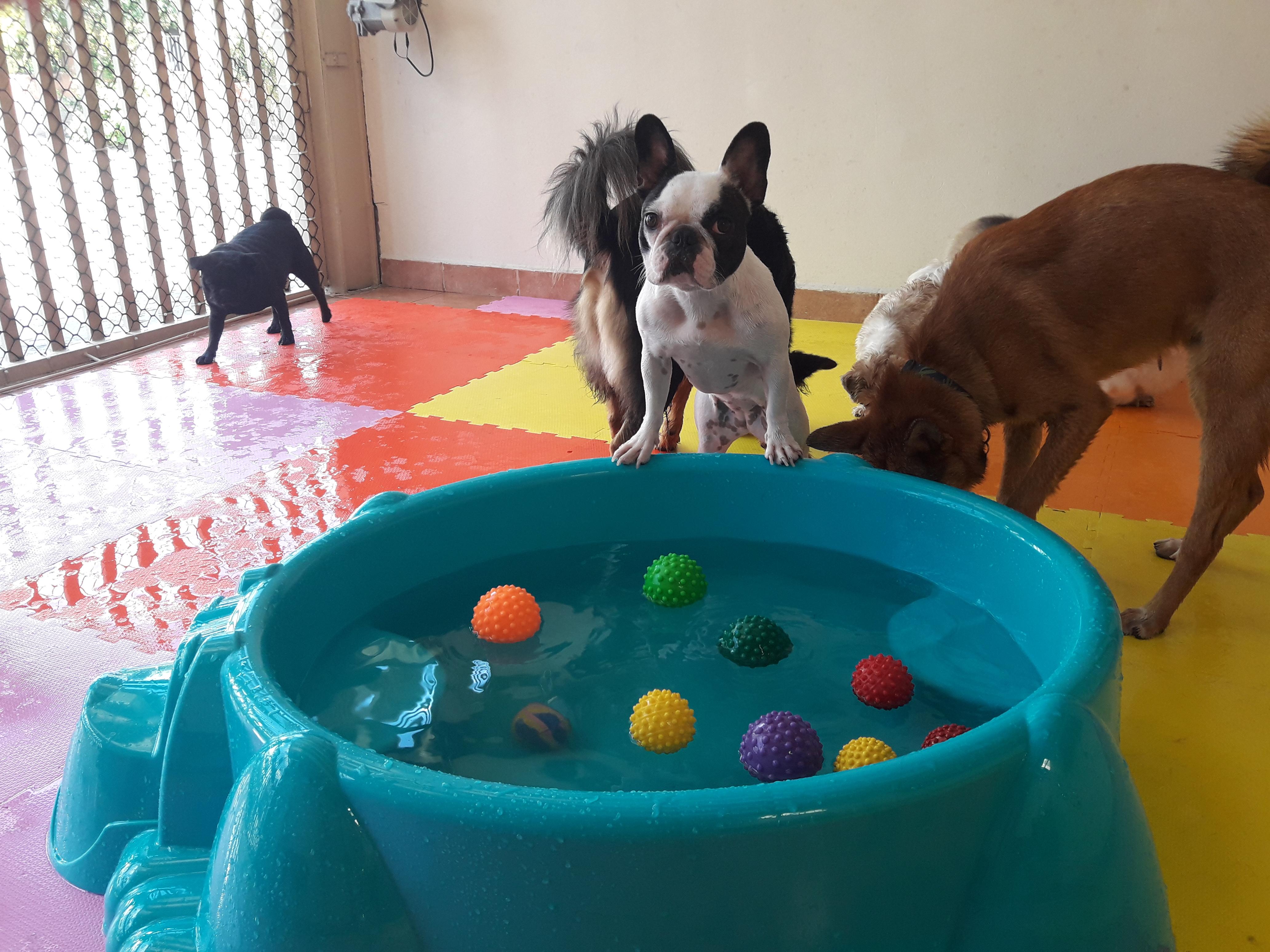 Cães-piscina-verão