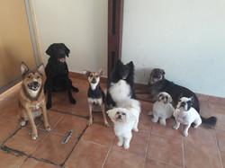 Cães-creche