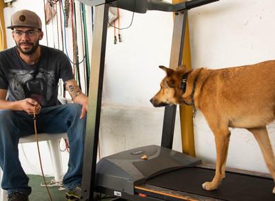 Saiba quais são os benefícios da prática de esteira ergométrica para os cães