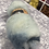 Thumbnail: Hand dyed Finnsheep Batt 118