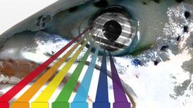 DÉMYSTIFIER LES MYTHES: la couleur d'un leurre par Bruno Mayot