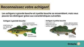 Lac St-François - Secteur Ontario 2021