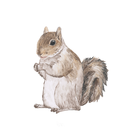 squirrel_edited.png