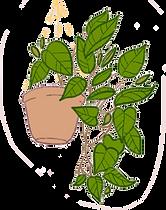 Plant hanging ilustration.png
