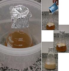 Fermento cervejeiro sendo ativado para fazer cerveja