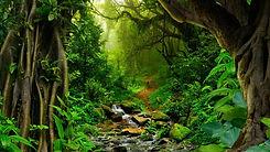 Amazon-Rain-Forest.jpg
