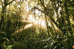 rainforest-photography-morning-sunlight_edited.jpg