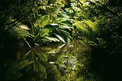 jungle-1340466209nfD_edited.jpg