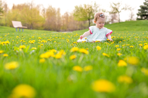 One year Old in Dandelion Field