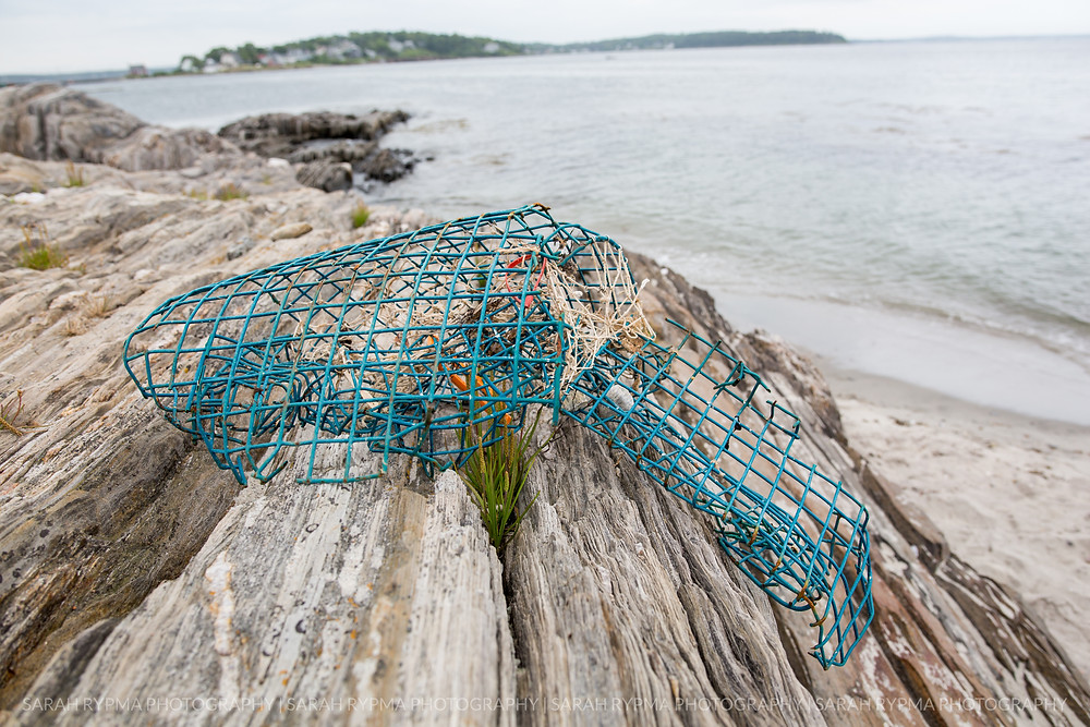 Lobster trap on the rocks
