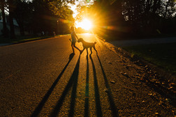 Girl walking dog at sunset in neighborhood