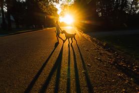 Girl walking dog at sunset in neighborhood