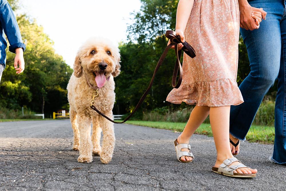 Family walking a dog on leash