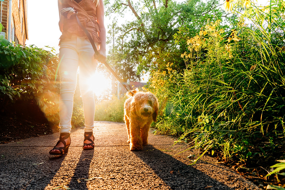 Teenage girl walking her dog outside on a leash with golden light streaming through