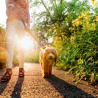 A Teenage Girl Walks Her Dog at Sunset