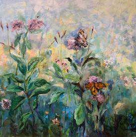 Milkweed and pollinators