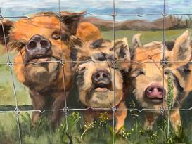 Pig, pig, pig