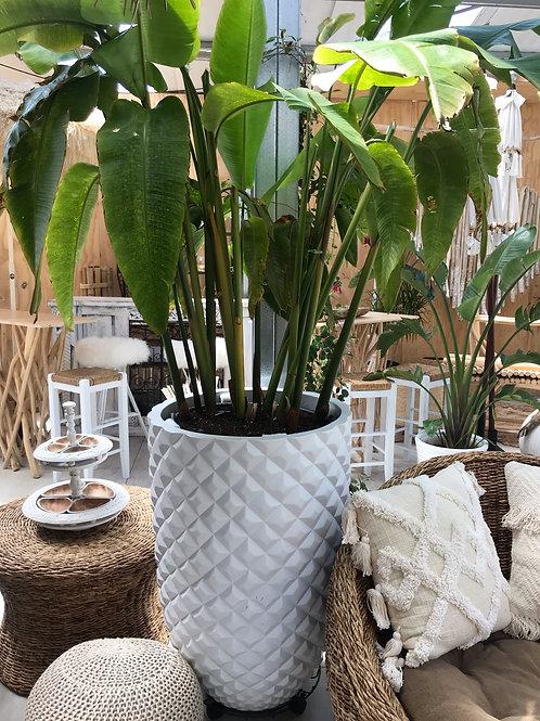 Heliconia Pineapple Pot