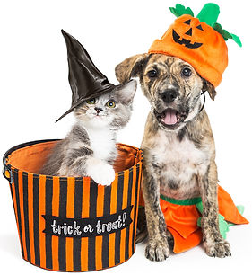 Funny%20puppy%20and%20kitten%20in%20Hall