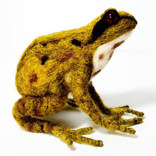 British Common Frog
