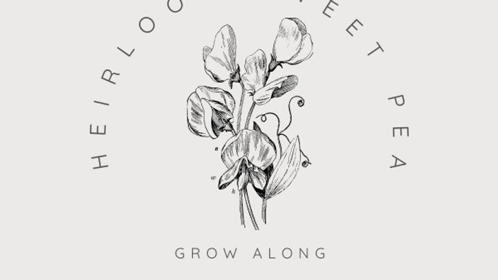 Heirloom Sweet Pea Grow Along