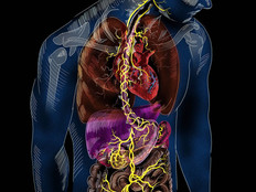 The Vagus Nerve ...the Key to Well-being