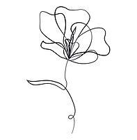 55-556216_transparent-flores-dibujo-png-
