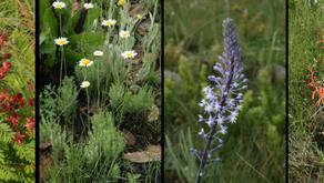 Tackling a BIG problem in a SMALL grassland: Beating bracken for biodiversity's sake