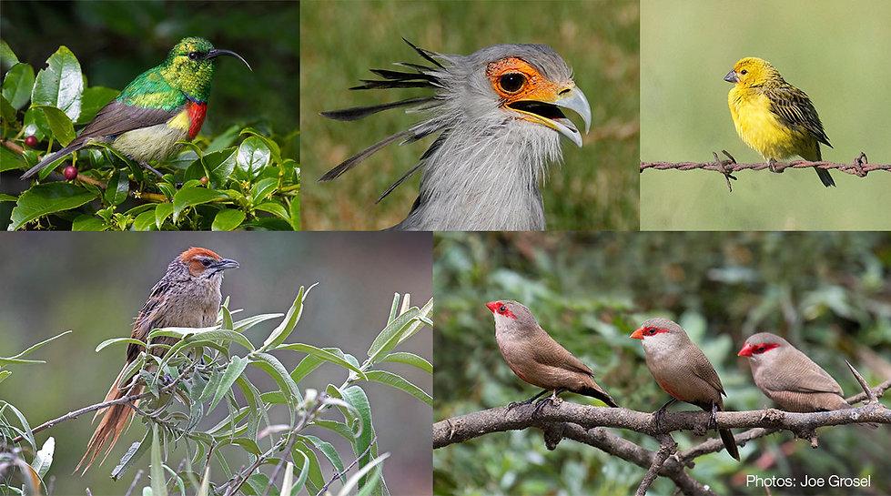 Birds-Joe-Grosel.jpg