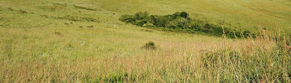 trail photo.jpg