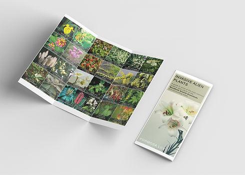 Trifold-brochure-mockup-web.jpg