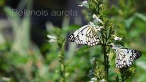 Haenertsburg Nature Reserve, a haven for butterflies.
