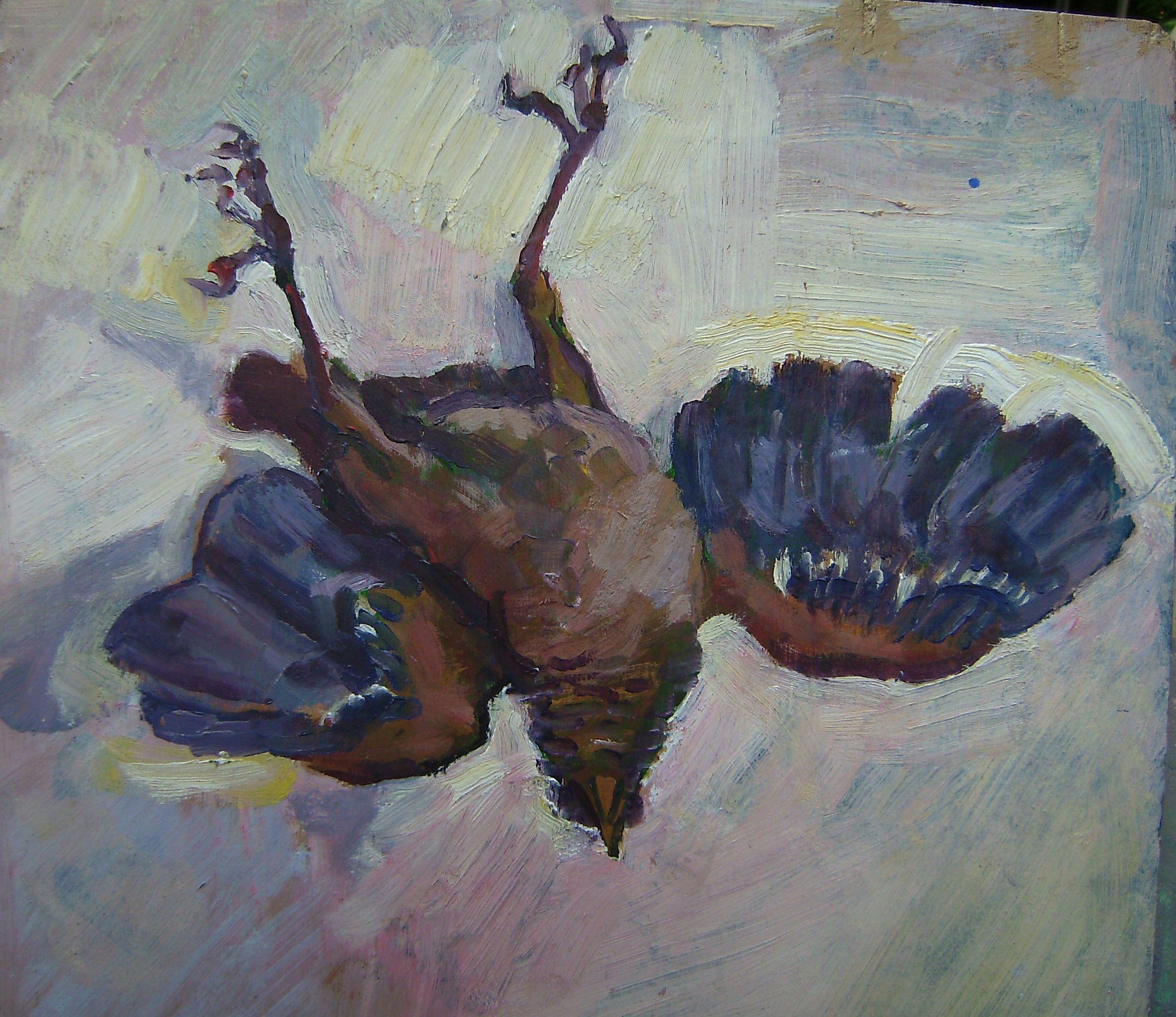 Ocell mort