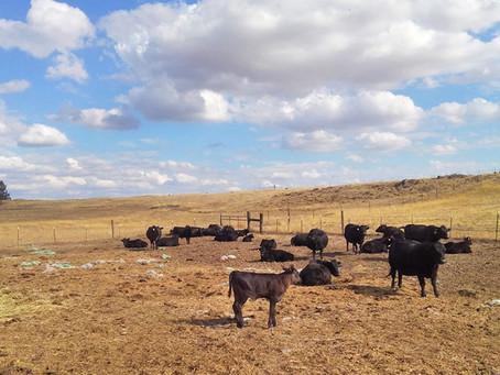 Rocky Ridge Ranch Newsletter - Sept 27