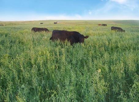 Rocky Ridge Ranch Newsletter - Aug 3rd