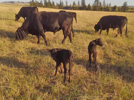 Rocky Ridge Ranch Newsletter - May 17