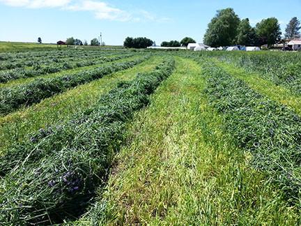 Harvesting Hay :)