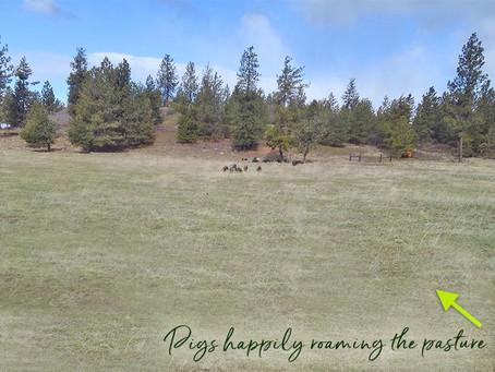 Rocky Ridge Ranch Newsletter - Apr 5
