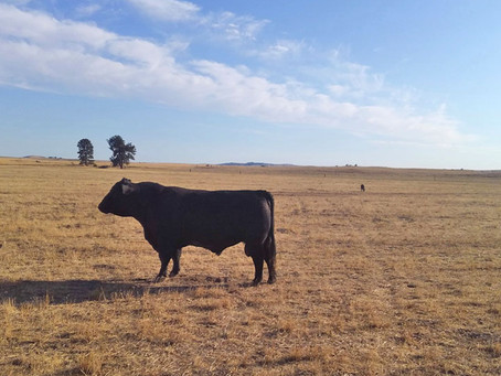 Rocky Ridge Ranch Newsletter - Aug 30