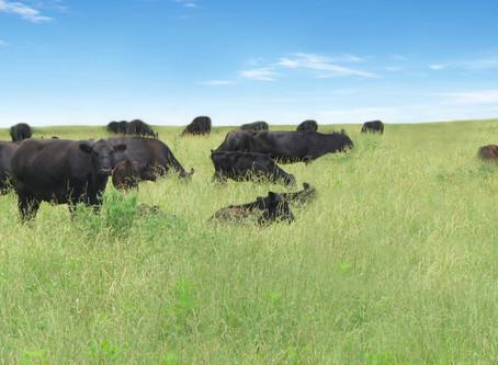 Rocky Ridge Ranch Newsletter - July 20
