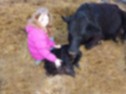 One of our granddaughters caring for a newborn calf
