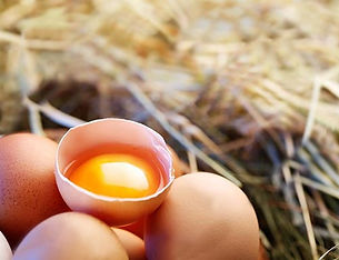 Our farm fresh free range pastured eggs