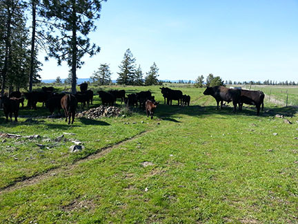 Rocky Ridge Ranch Newsletter - Oct 5th