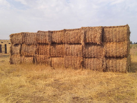 Rocky Ridge Ranch Newsletter - Aug 23