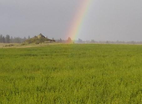 Rain, Rain & Rainbows!