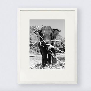elefante-3.jpg