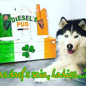 Hundepub, HUndenapf im irishen Deign.jpg