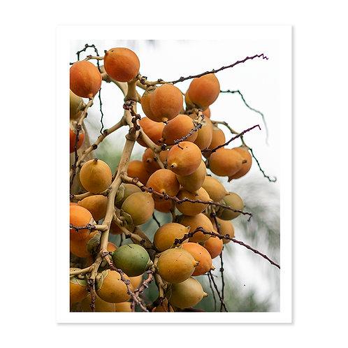 Copia de Singapore Peaches